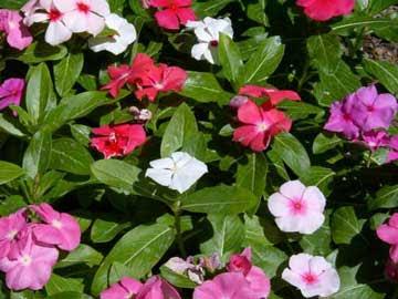Vida a lo verde living in green buenas tardes o vicaria for Que significa plantas ornamentales