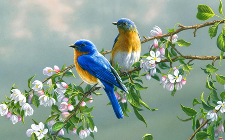 birds beautiful bi...