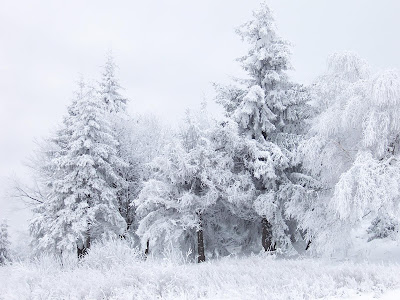 winter seasons wallpapers by picwall