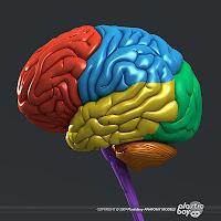 3d Brain6