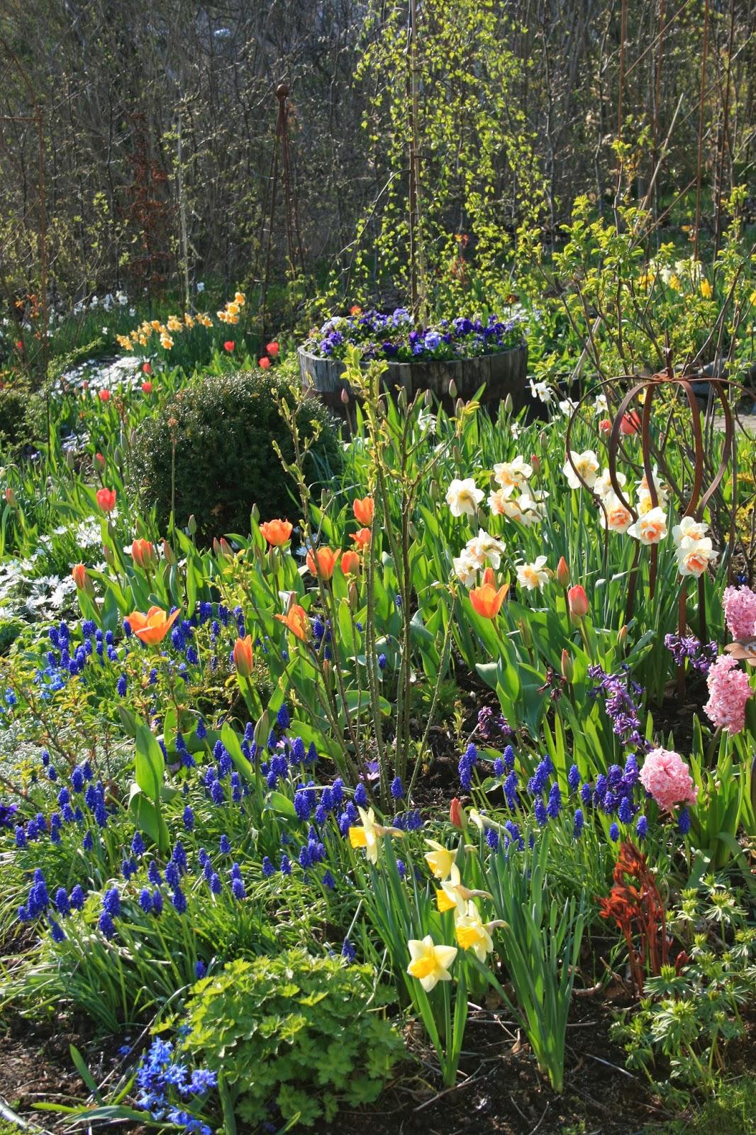 blogg trädgård