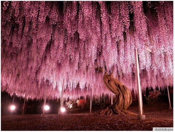 Inilah Pokok Bunga Yang Paling Indah Di Dunia