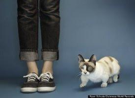 World's Smallest Living Cat