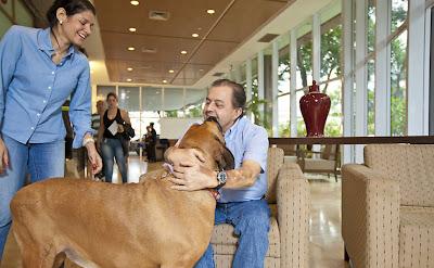 cachorro visita hospital3