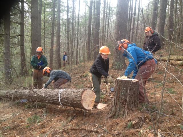 warren wilson college forestry program  chainsaw training