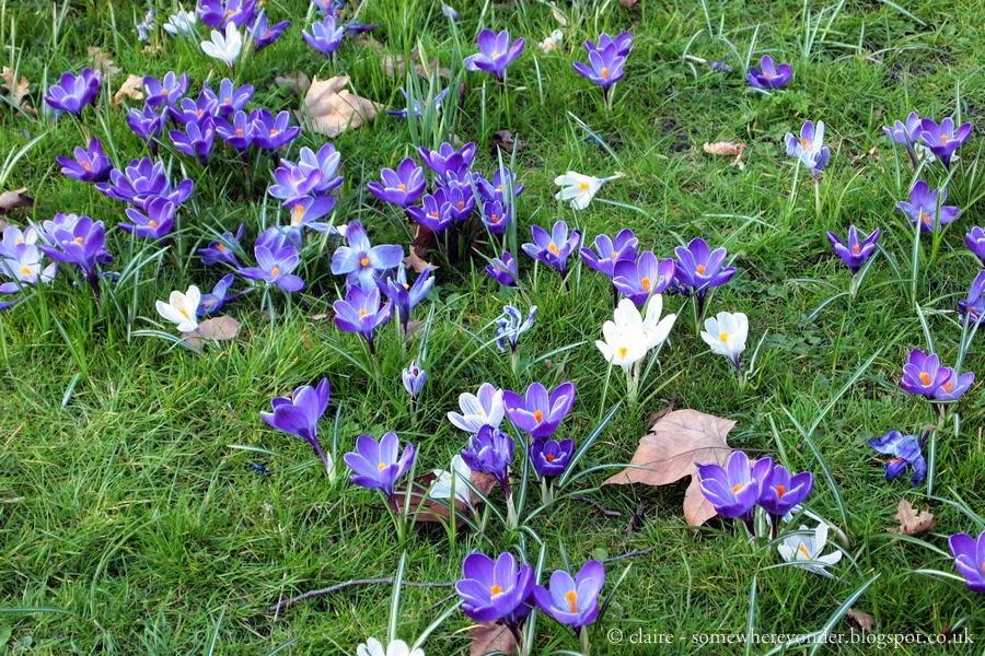 flowers - Hyde Park