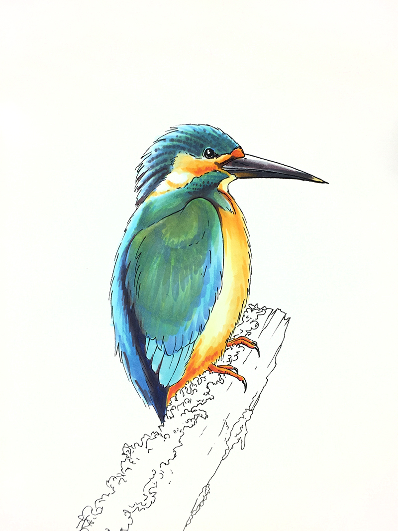 I Like Markers Coloring A Kingfisher Bird