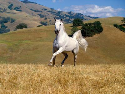 White Horses Wallpapers