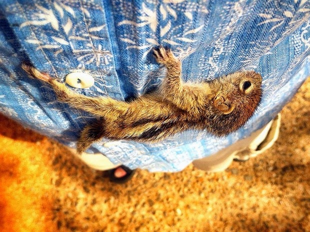 Baby Palm Squirrel Rescued By Wildlife Filmmaker 2