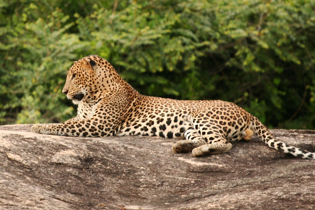 Yala Sri Lanka  city photos : Yala National park: Pictures of Video Gallery of Yala National Park