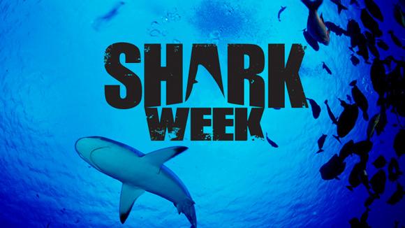 Megalodon Shark Week 2013