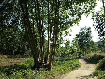 El camí entre les masies de Can Cot i Can Pau de la Rosa