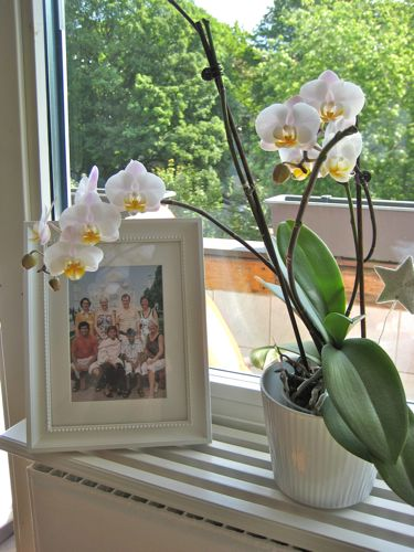 how to know if my orchid is dead