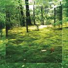 Gathering Moss: Gathering Moss