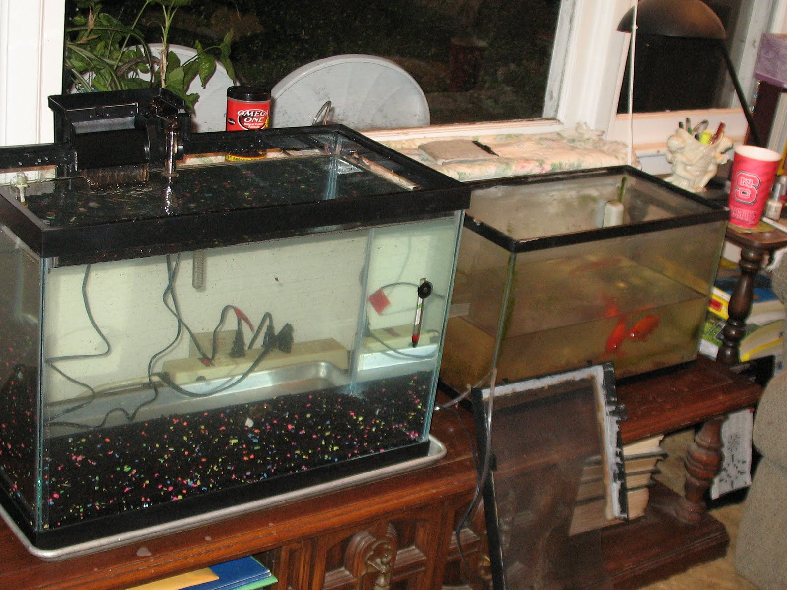 10 20 gallon fish tank hall of flowers 20 gallon fish for 20 gallon fish tank petsmart
