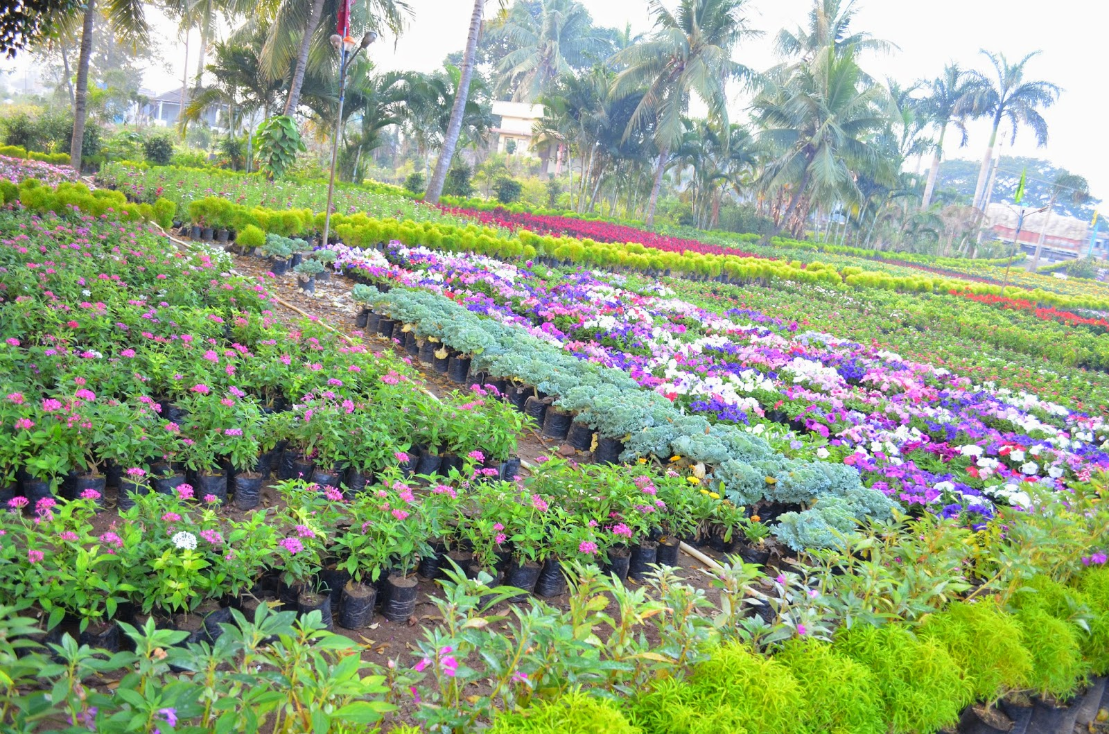 Kitchen Garden In India Entertaining From An Ethnic Indian Kitchen Visiting A Nursery In
