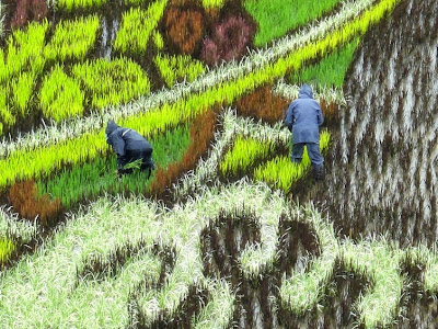 creative ideas, painting in a paddy fields