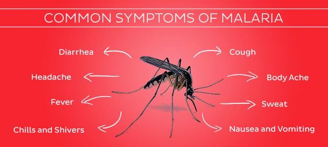 Pengertian Penyakit Malaria Adalah - Gejala Malaria