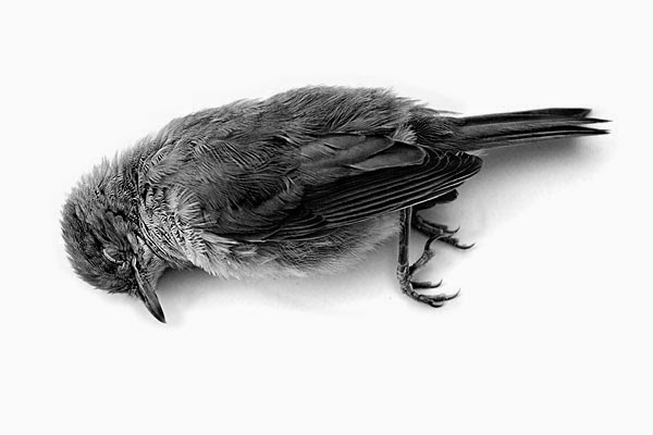 dead birds essay The dead bird example college essay example this was written for a common app prompt that no longer exists, which read: evaluate a significant experience, risk, achievement, ethical dilemma you have faced and its impact on you.