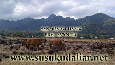 http://www.susukudaliar.net