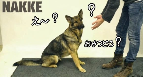 """Magic for the dog! ! If you hide the """"snack"""" in front of the eye using the magic dog."""
