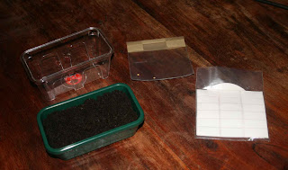 Ready to sow the ghost chillies with labelling equipment and the tray