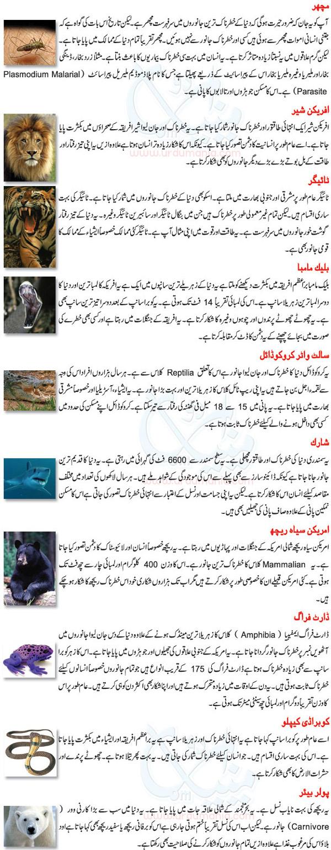 Wild animals names in urdu - All Pictures top