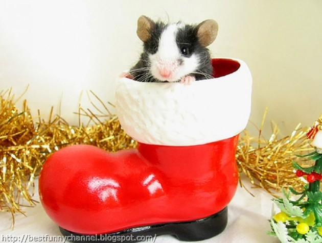 Funny Christmas mouse.