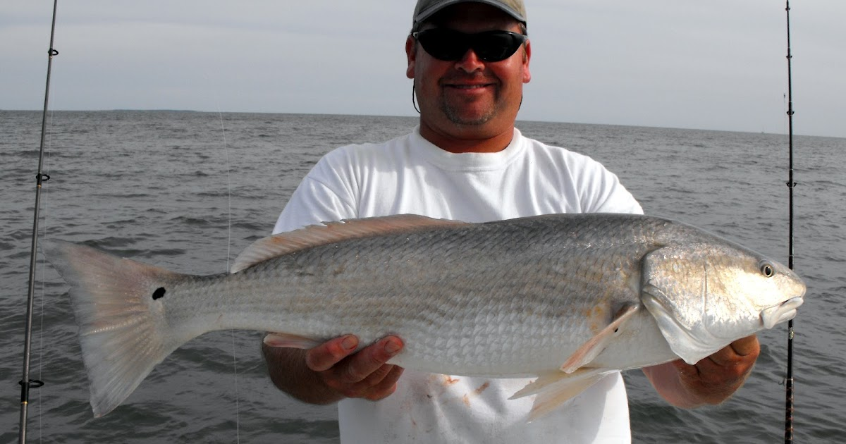 Top water charters fishing reports and news beaufort for Blue fish dental