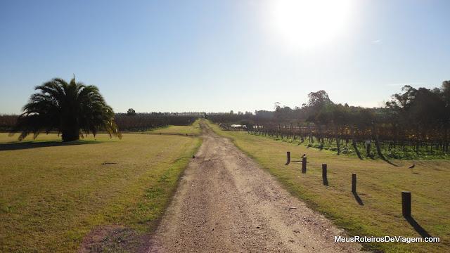 Vinhedos da Bodega Bouza - Montevidéu, Uruguai