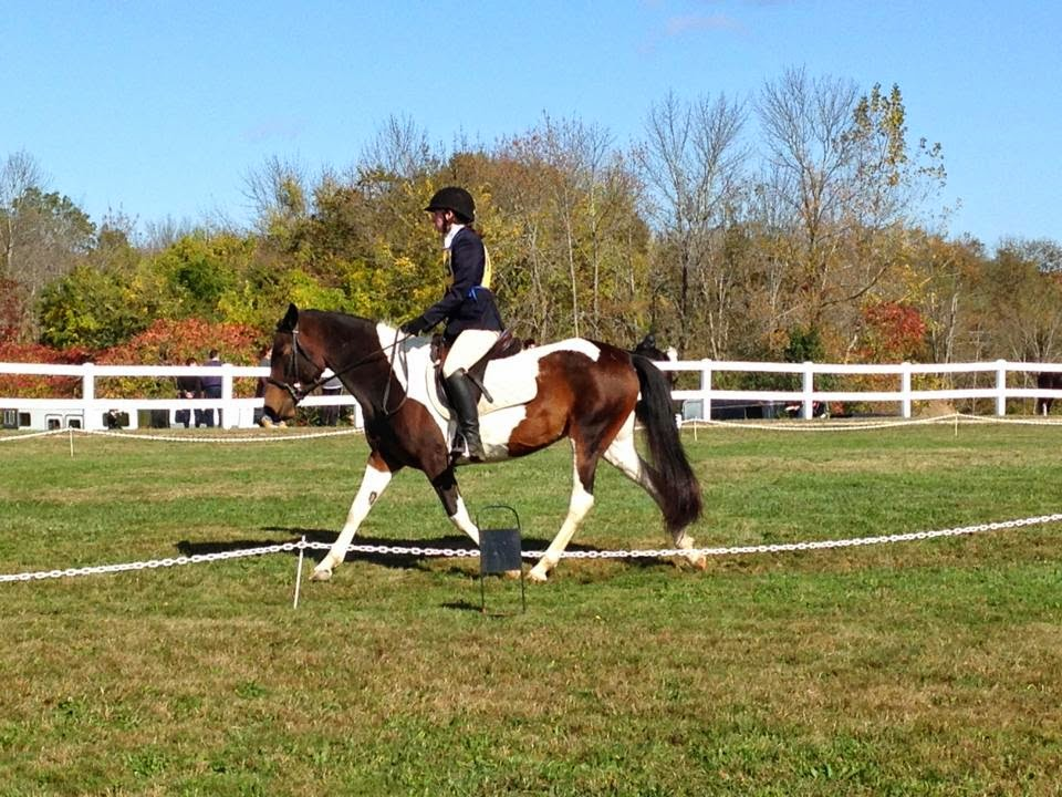 Pipestave Hill October 2013 Dressage
