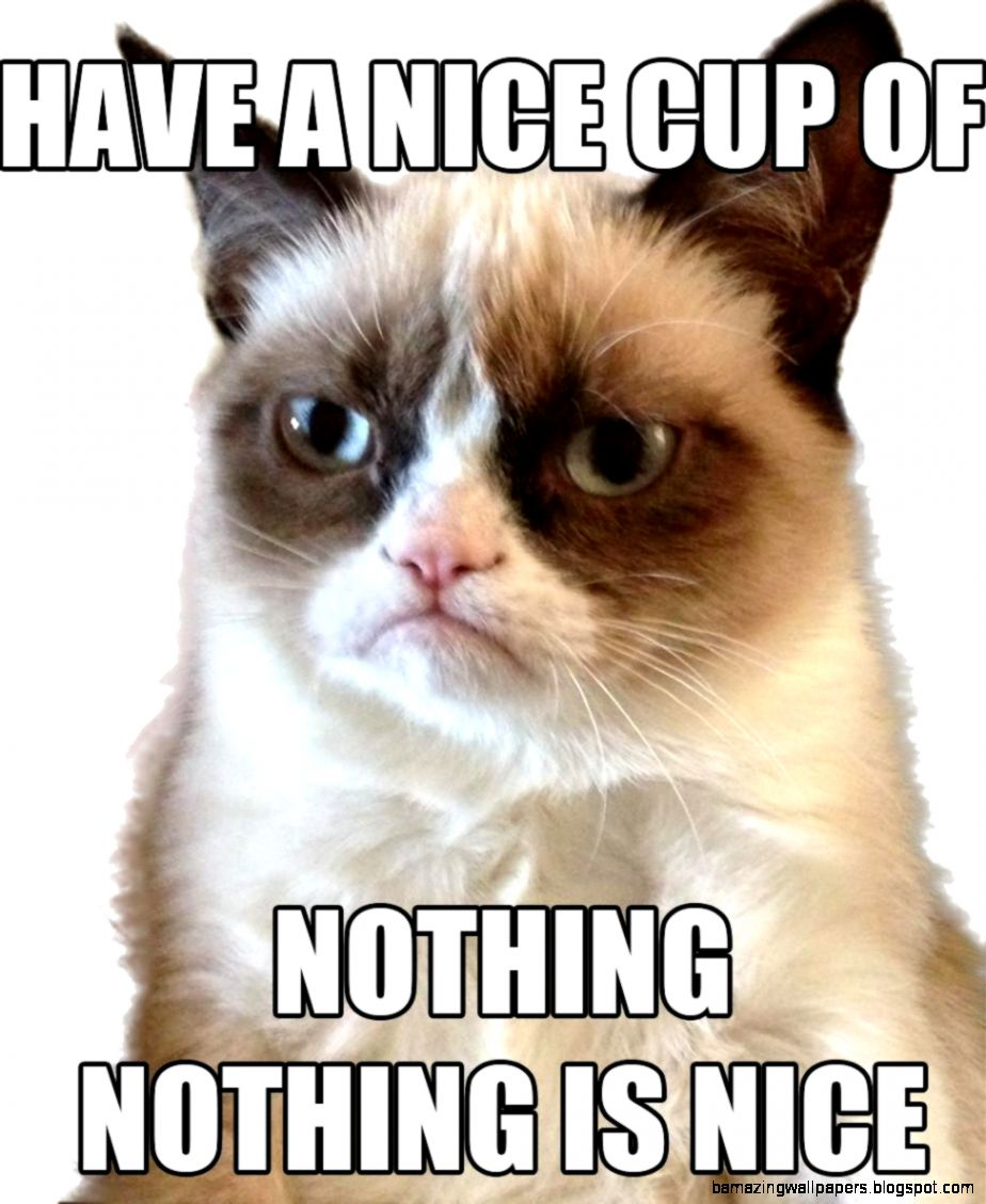 Funny Grumpy Cat Pictures With Quotes Wild Animal Live