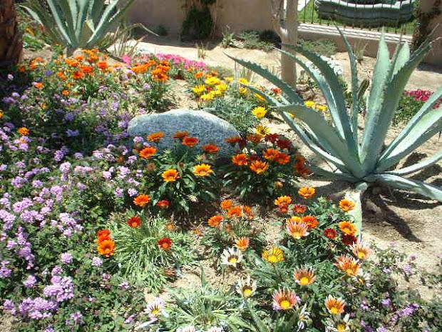 dr. dan's garden tips