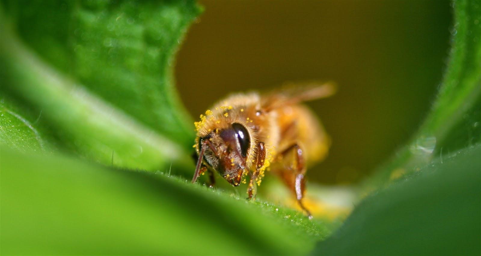 5 Major Benefits of Bee Pollen