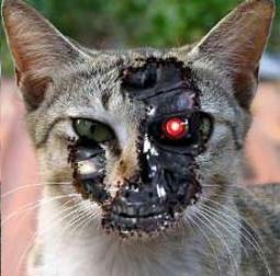 "Peligra nueva entrega de ""Terminator"""
