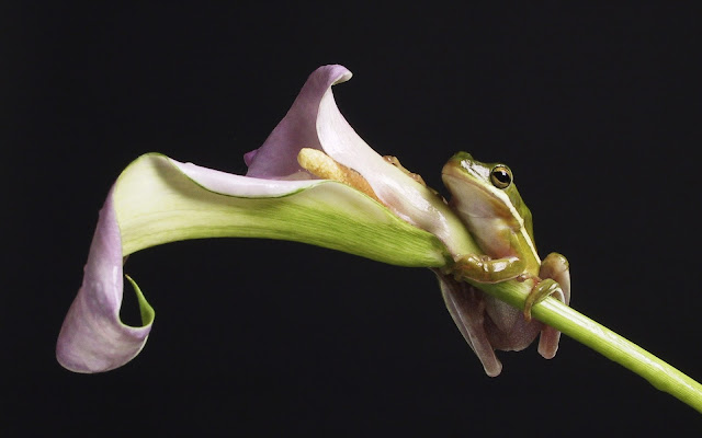 Best Jungle Life frog, flower, wallpaper