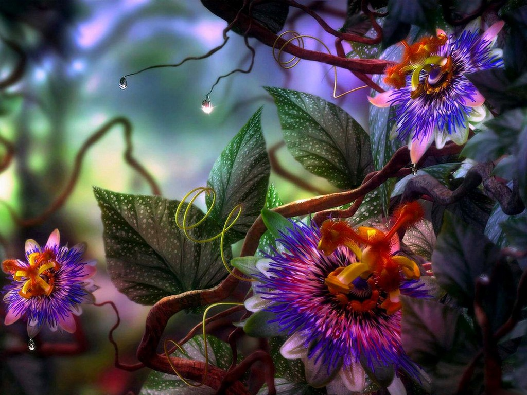 Colourful Nature Multi Color Flowers Wallpapers Pictures