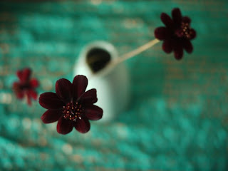 http://zootodays.blogspot.com/