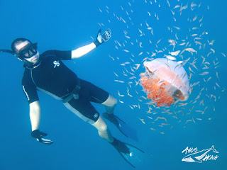 Big Jelly Fish