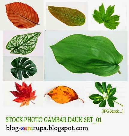 Stock Photo Gambar Daun
