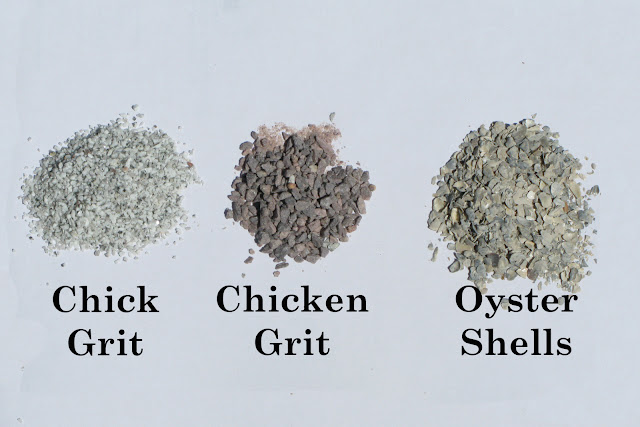 Chicken Waterer Do Your Chickens Need Grit