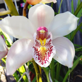 Pretty spring orchid in our garden