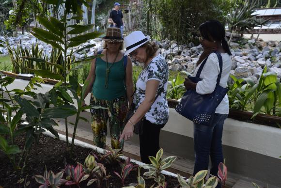 plantas jardim sensorial : plantas jardim sensorial:Jardim sensorial do Jardim Botânico é reaberto com mais