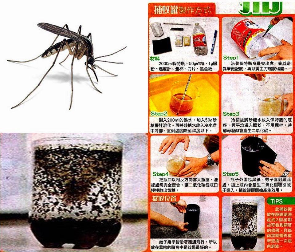 Perangkap nyamuk botol  Aqua bekas