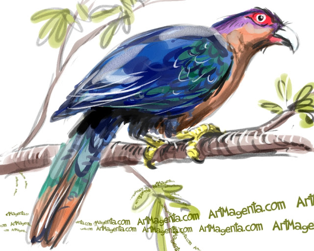 Chestnut-breasted Malkoha sketch painting. Bird art drawing by illustrator Artmagenta