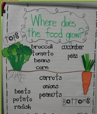 Lil Garden Cuties Freebie on Garden Rabbit Worksheet For Kindergarten