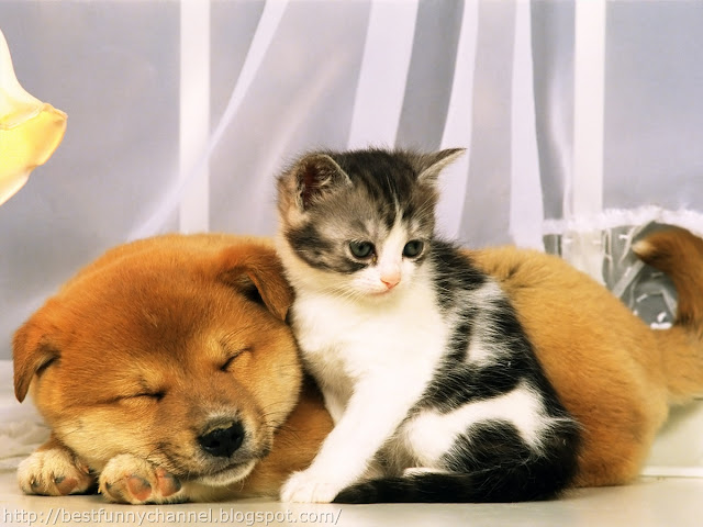 Kitten and dog.