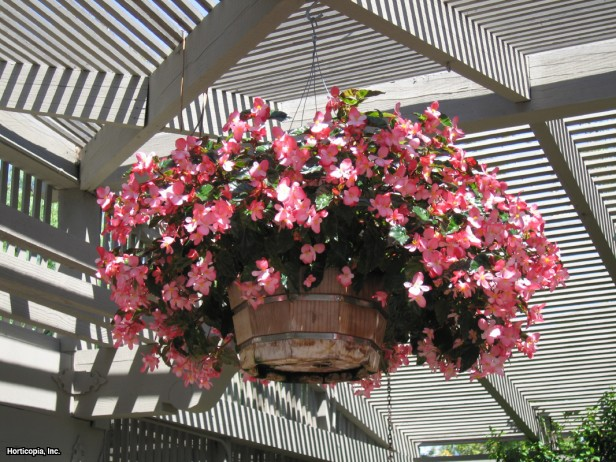 Pátio das Flores Flores o ano todo