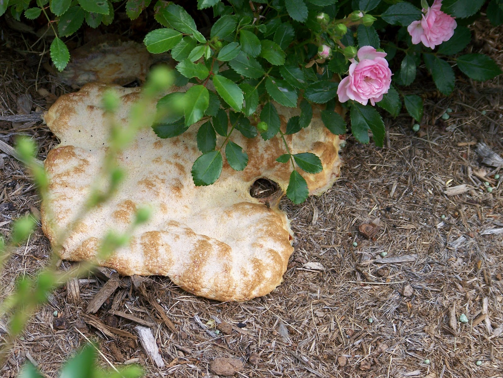 how to get rid of fungus in flower beds
