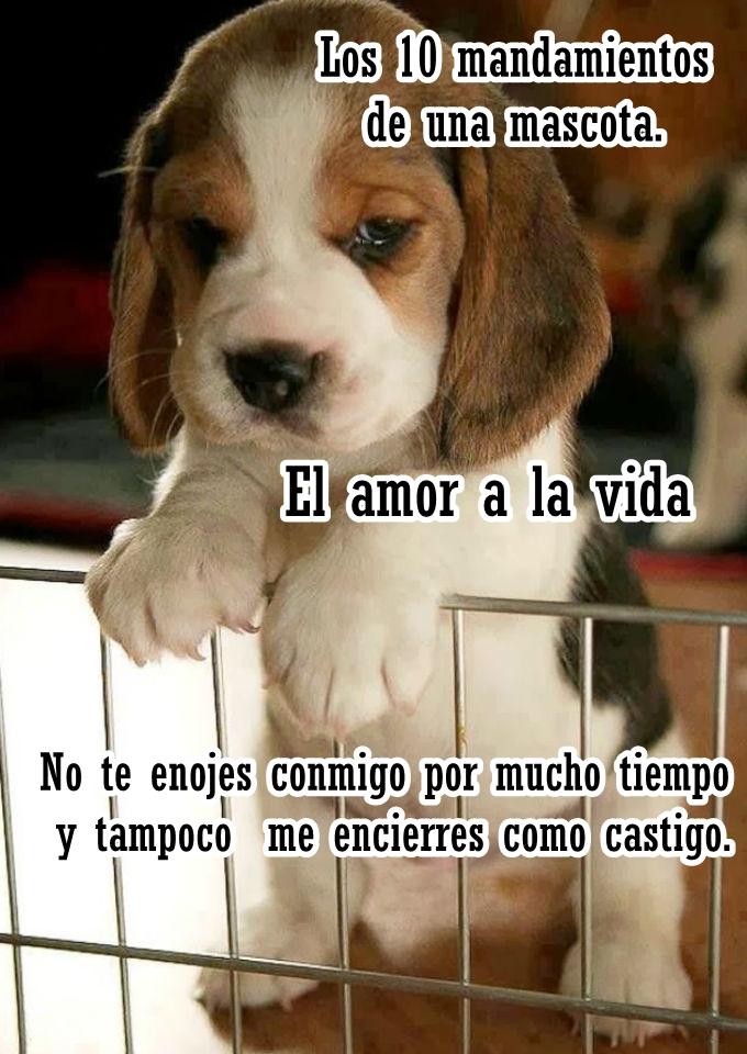 El Amor A La Vida Los Diez Mandamientos De Una Mascota